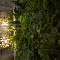 Vista corona franquicia jadin vertical natural